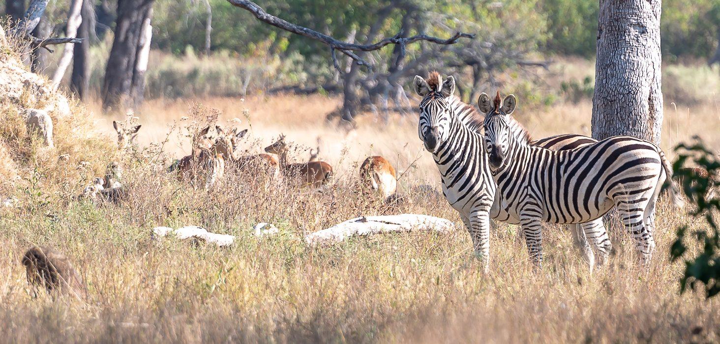 PRIVATE African Safaris